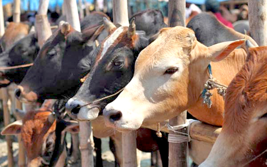 Out of six largest meat suppliers in India four are Hindus - Muslim